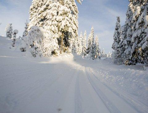 UT PÅ SKI: Det har falt mye snø i det siste, og skiforholdene er fine.