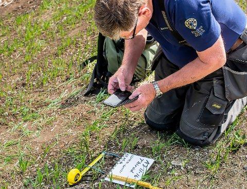 Arnkjell Johansen er interessert i å sjekke spor og ta DNA-prøver av ulv i Follo. Her sjekker han spor sommeren 2016.