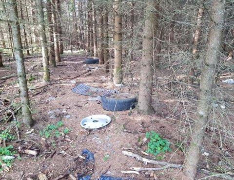 Langs en avstiene i Tandeskogen ligger hjulkapsler og bildekk, plast og annet skrot.