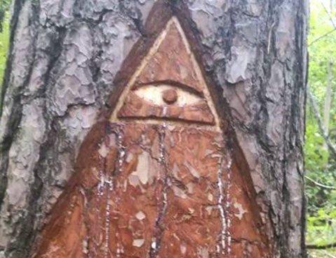BUDSKAP: Et av trærne ser nå slik ut. Foto: Privat