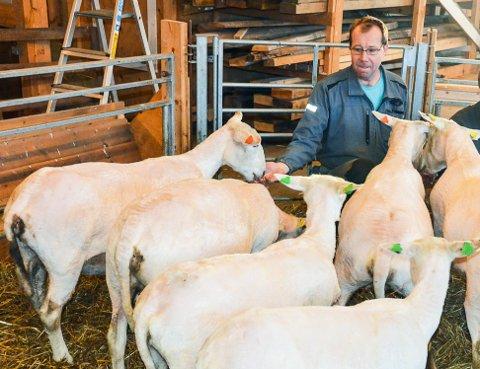 Viktig lag: Torstein Lie sier Hedrum bondelag fortsatt har en vikitig rolle for bøndene i området, både faglig og sosialt. (Bildet er fra en reportasje fra gården hans for noen år siden).