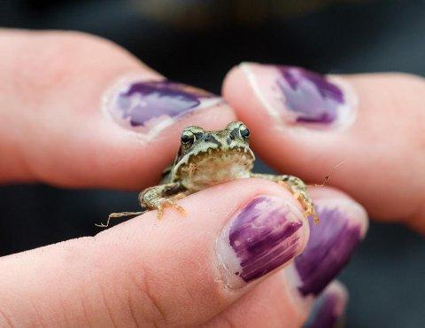 Bildet av den lille frosken i hendene til en jente. Kontraster: stor og liten. Foto: Magnus Reneflot