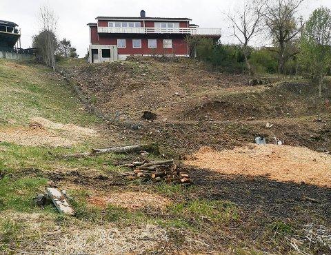HOGST: Kommunens bilder fra befaringen viser at mange av trærne er kappet ned.