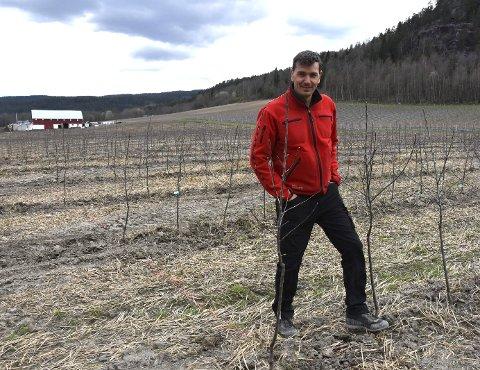 FRA KORN TIL EPLER: Her på jordet dukket det opp 17.500 nye epletrær i fjor.  Daglig leder Pål Audun Høyen forteller at de har investert 12 millioner i å legge om driften de første fire årene.