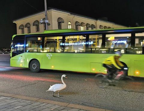Svanen var løsningsorientert og ga plass til både 71-bussens ferd mot Bragernes, samt syklisten som rullet mot Strømsø. Senere skulle problemene komme.