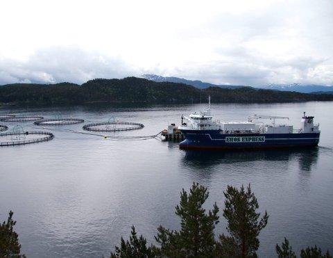 Sin rettmessige del: Det er på høg tid at også vertskommunar for oppdrettsaktørar får sin del av den store verdiskapinga som skjer i norsk havbruk, meiner styret i Nettverk for fjord- og kystkommunar (NFKK).