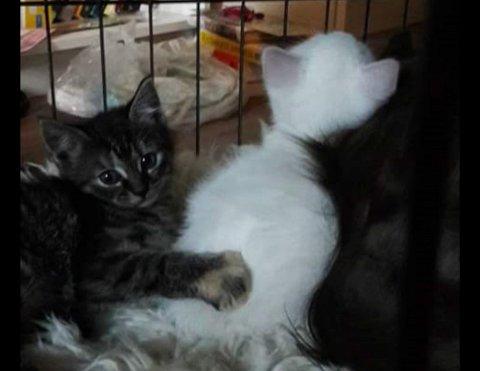 Viss du vil ha ein slik, oppfrodrar Bjordal til å bli fôrvert. Då tar ein vare på katten fram til Dyrebeskyttelsen finn ein ny heim til den, med mat og veterinærkostnader dekka.