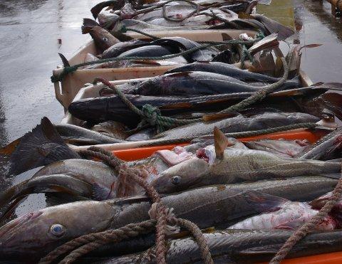 INNDRATT: Rederiet måtte tåle inndragning av fangst til en verdi av 100.000.