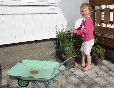 POPULÆRT: Karen Kirkelund (snart 4) fra Hernes forsyner seg med litt gressløk. – Det er fint å kunne dyrke litt sjøl. Egne grønnsaker smaker da også ekstra godt, sier mamma Anette Kirkelund.