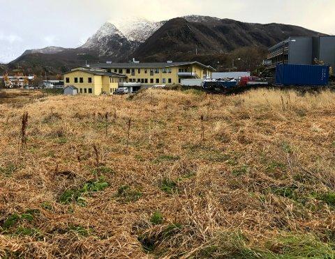 Tomta: Det er på denne tomta, vest for Steigentunet, at de ti omsorgsboligene skal oppføres.