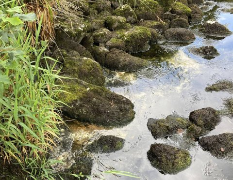 Kloakken og det varme været fører til ekstra groe og sleipe i den vannfattige elven i Dale.