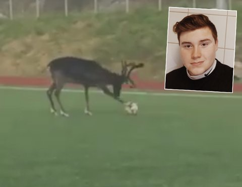 RE(I)N FOTBALLGLEDE: Tor Martin Kræmer filmet et reinsdyr leke seg med ballen på Ersfjordeidet utenfor Tromsø. Se video nederst i saken.