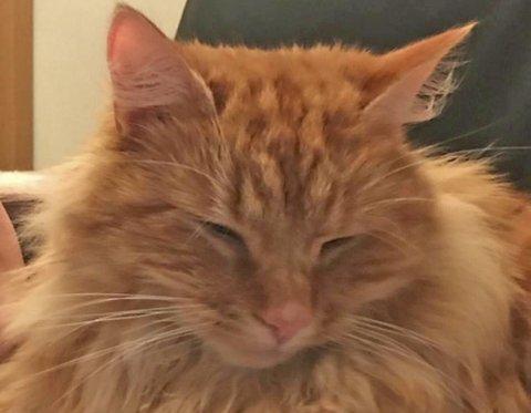 TORTURERT: Katten blei fanga i ein sekk, torturert til døde og senka i sjøen.