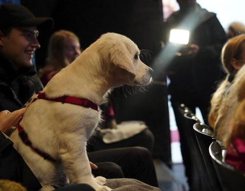 Det populære tilbudet om å ta med seg hund på kino blir avlyst i går på grunn av hundesykdommen som har herjet landet den siste tiden. Innfelt sitter Jesper Kirkeby Brevik med hunden Cheese, som var på BIFF i fjor. I år er han helt enig i at BIFF avlyser.Foto: BIFF og Carsten Brønner Johnsen (innfelt)