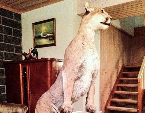 KATTEPINE: Pumaen skal nå selges.