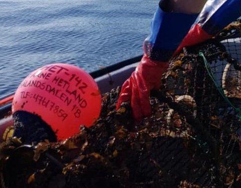 Her ble teinen fra Skudeneshavn plukket opp av fiskeren i Møre og Romsdal.