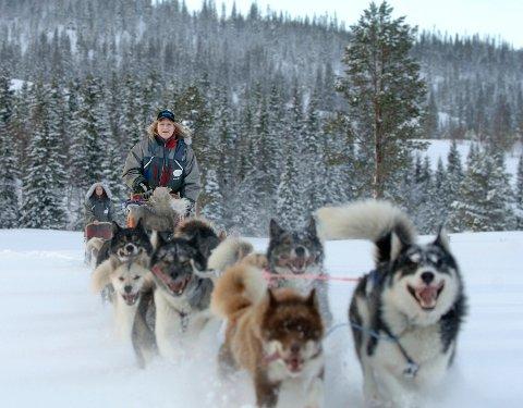 Mange turister ønsker å være med på hundekjøring når de kommer til Norge vintertid. Her er  Charlotte Johansen og Mette Ånes i sving på Sjåmoen.