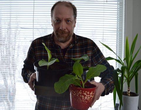 PLANTER MYE FORSKJELLIG: Lindbach sier kona hans er vant til at han prøver ut mye rart med forskjellige planter nede i kjellerstua. Derfor sa hun ingenting når han fant ut at han skulle plante tobakk.
