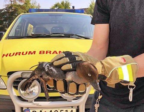 REDDET: En kvinand i nød ble reddet av Hurum brannvesen etter å ha kilt seg fast i et piperør under reirbygging.
