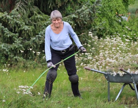 – Første års forsøk uten robotklipper avslørte mye ryllik. Det blir spennende å se hvordan det utvikler seg i år, sier Gunhild Ullerud, som tok ljåen fatt da blomstringen var over og frøet sikret.