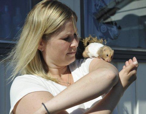 Hamster: En av de to hamsterne som Renate Magnussen har i sin nære familie i Svolvær. Den følte seg nøye fram i det sterke sollyset, siden dette er et dyr som er mest aktiv nattetid. Alle foto: Knut Johansen