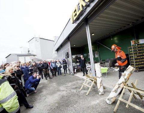BRUKTE MOTORSAGA: I stedet for snorklipp delte Hans Petter Aurstad ei bjørk foran inngangen.