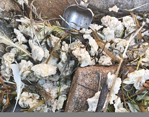 SLIK SER DET UT: Parafinvoksen har allerede truffet Moss i store mengder.
