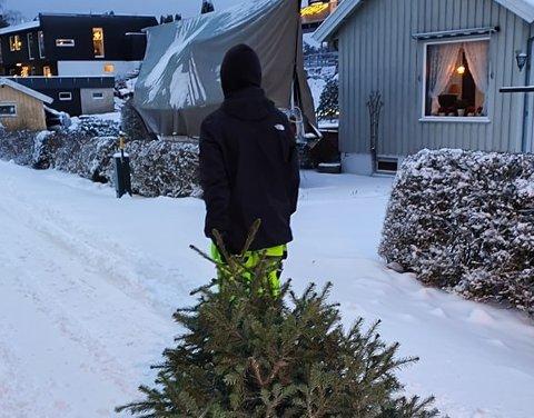 HENTET JULETRÆR: Mange er ferdige med jula 2020 og ønsker å kvitte seg med de gamle juletrærne. Elever ved Lille Varden henter. Men mandag støtte de på utfordringer. FOTO: Privat