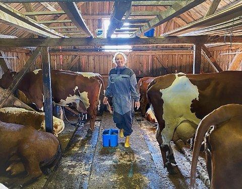 Travle morgener: Hanna Strand Selås må opp klokka fem hver morgen, stelle seg sjøl og spise frokost, for så å gå ut i stølsfjøset og mjølke 13 kuer.