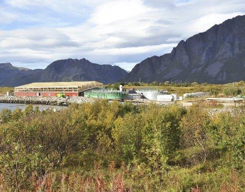OPPFDRETT: Framnessmolt AS driver smoltproduksjon på Kleppstad.