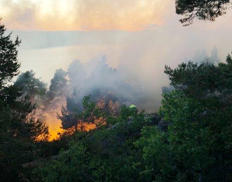 Skogbrann ved Røysåsen i Moss. Brannvesenet melder om mye røyk og utfordrende slukkingsarbeid.