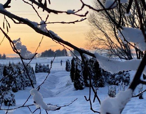 – Skiløpere i solnedgang, skriver Siv Seland på facebook. Bildet er tatt ved Folkvord planter AS mandag 1. februar.