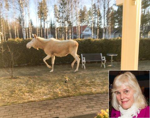 SPESIELT MØTE: Inger-Johanne «Vesla» Nordset fikk et ganske så uvanlig helgebesøk.
