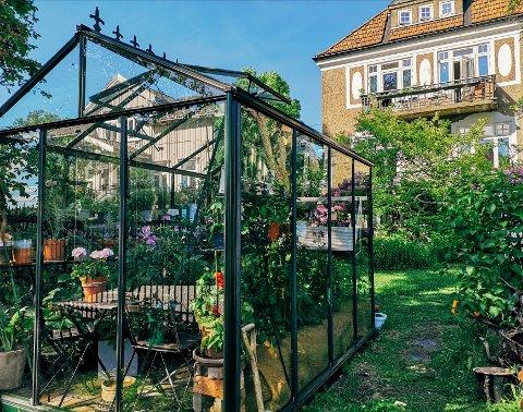 GRØNT OG KLASSISK: Drivhuset står i stil til huset. Her møtes likevel romantisk hage og moderne dyrking midt i byen.