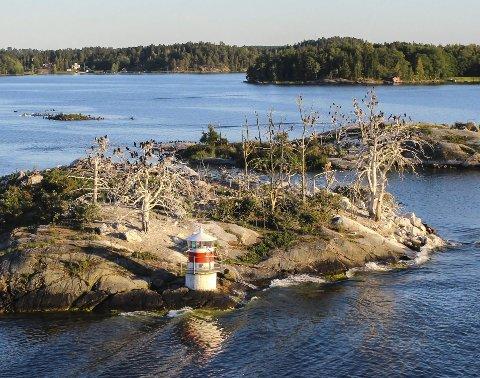 : En skarvekoloni på øya Ryssmasterna i Stockholm skjærgård. I området finnes det nå nesten 30.000 skarver. Av disse kunne 675 felles i 2016. Der mener noen det er for mye skarv, som spiser for mye fisk, mens andre sier det er for lite skarv, som spiser for lite frisk. Foto: Rune Fjellvang
