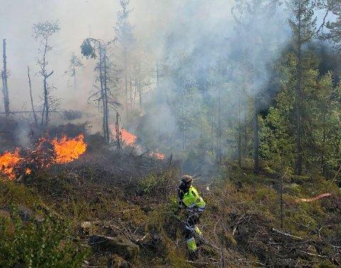 SKOGBRANN: Brannen oppsto i et hogstfelt mellom Merkedammen og Vestbygdveien.