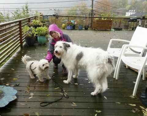 Hundeeier Beate Vikøren har endelig fått Ozzy (til v.) og Vilma tilbake på terrassen på Storetveit. Begge de firbeinte stakk av natt til søndag. – Heretter skal porten holdes lukket!