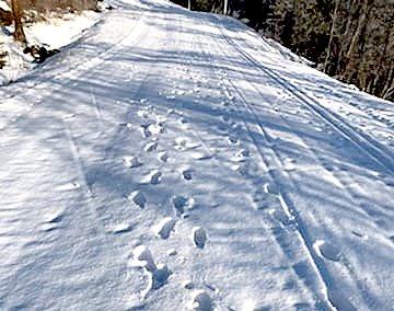 IKKE GJØR SLIK: Noen har gått i skisporet ved Hof skole.