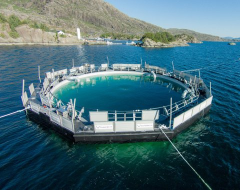 MODERNE: Ecomerden er en lukket merd der flytekragen er en stiv stålkonstruksjon, utstyrt med en dobbel vegg mot sjø. Den skal tåle store påkjenninger. (Foto: Ecomerden)