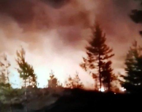 TUROMRÅDE ØDELAGT: Tre mål skog sto i full fyr onsdag kveld. Brannen startet ved en gapahuk.
