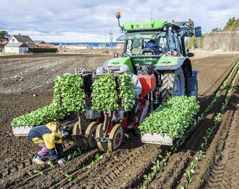 INNTEKTSOVERSIKT: Bøndene i Vestfold har økt inntekten betydelig fra 2014 til 2015. (Arkivfoto/Illustrasjonsfoto)