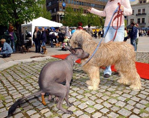 BÅNDTVANG: Selv om det i hovedregel er slutt på båndtvangen 20. august, er det mange steder det ikke er lov å ha løs hund. Som for eksempel her på torvet i Sandefjord sentrum. Det er også en egen forskrift som plikter hundeholder å fjerne avføring fra hund på alle offentlige områder.