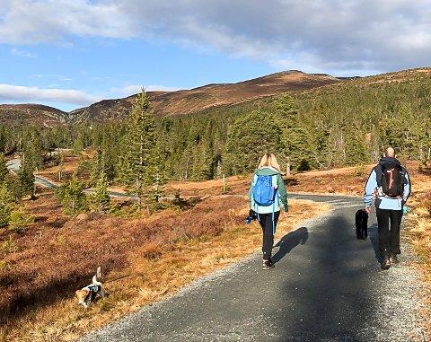 ØKT INTERESSE: Mange søker til Norefjell for ferie, avkobling og opplevelser. Og flere skal det bli. Det er Visit Norefjell sikre på.