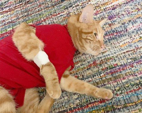 MÅ SLAPPE AV: Katten Thomas ble i helgen skutt med luftgevær.