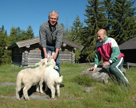 Nordgardsetra: Har åpent hver dag til og med 17. august. Kuer, sauer, rømmegrøt, vafler, skog og stillhet.