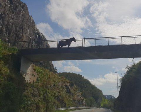 FOTOGRAFERT: Roxy (27) er en berømt hest. Den er utrolig mye fotografert og utvilsomt Lund mest kjente hest for tiden.