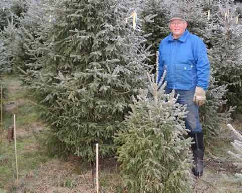 STØRRE: I år blir juletreet størr og det har bonde Einar Østby hjulpet til med.