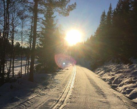 GODE FORHOLD: Det er gode skiforhold flere steder i Larvik. Bildet er fra Løvås. (Foto: Hege Melby)