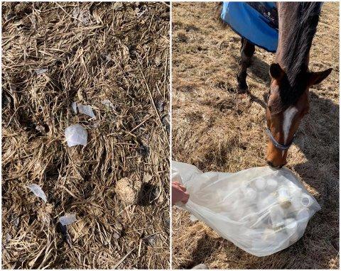 SAMLET PÅ FÅ TIMER: Denne søppelposen klarte hesteeier Anne-Birgitte Wilhelmsen å fylle godt opp i løpet av få timer.