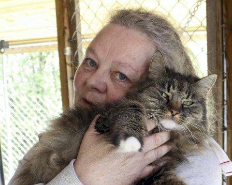 KOSEPUS: Brutus vil helst ha kos hele tiden, og Gunn Nordølum på Potegården gir ham det gjerne.   Hun er nemlig litt over gjennomsnittlig katteelsker.
